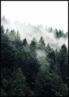 Misty Forest Juliste