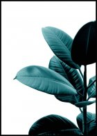 Green rubber plant Juliste