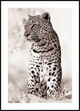 Leopard in the wild Juliste