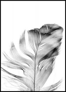 Feather Juliste