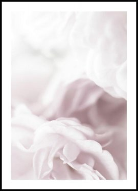 Soft Rose Juliste