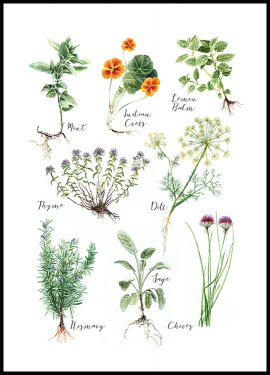 Kitchen Herbs Juliste