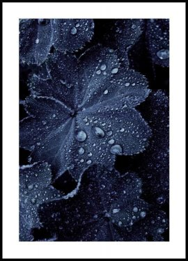 Blue Leaf Droplets Juliste