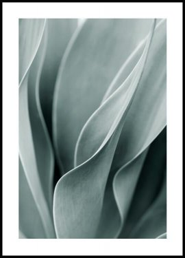 Agave leaves Juliste