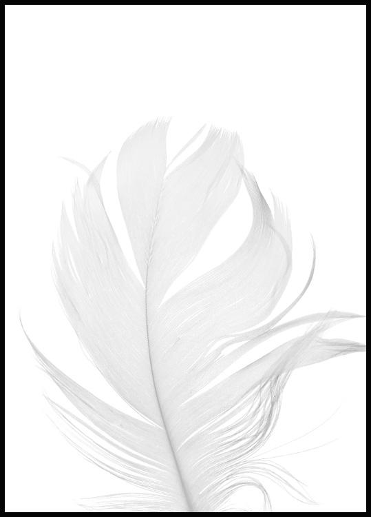 White Feather Juliste