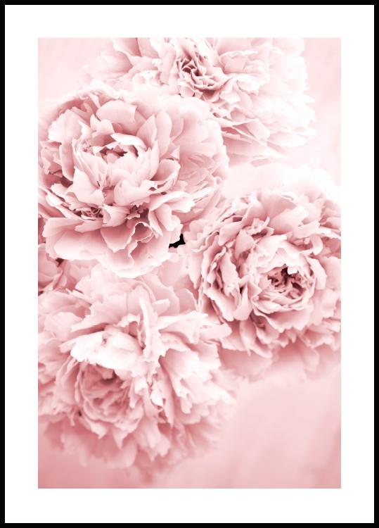 Pink Flower Dream Juliste