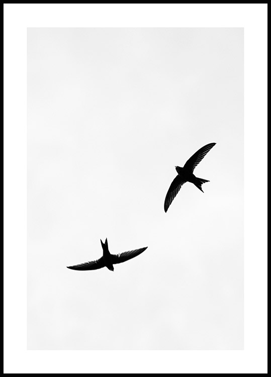 Birds Above Juliste