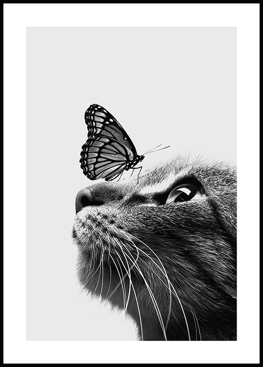 Cat and Butterfly Juliste