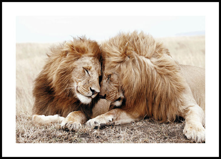 Lion Brothers Juliste