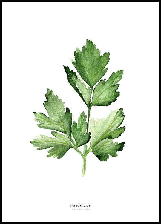 Parsley Juliste