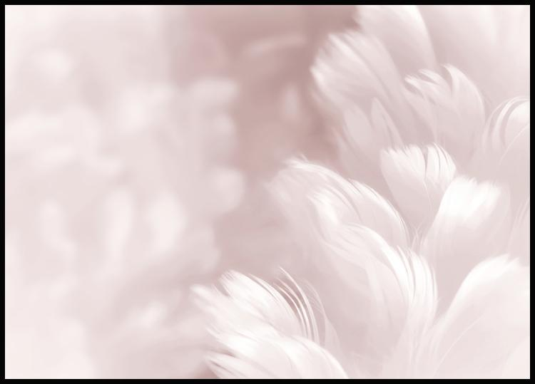 Pink Feathers Juliste